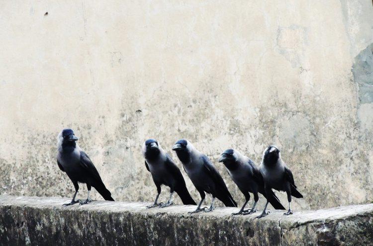 Kiedy wejdziesz między wrony, kracz jak one